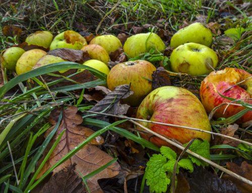 Angstculturen en rotte appels